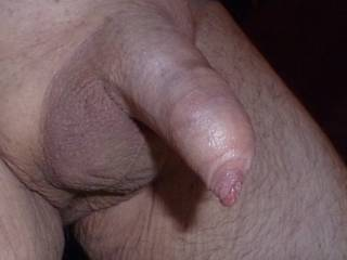 shaved and uncut